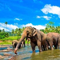 Splendours of Srilanka