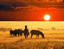 africa-img